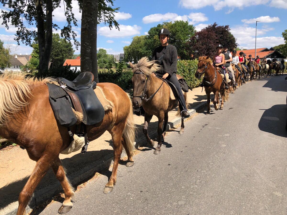 Badetur med heste på ridelejren i uge 29