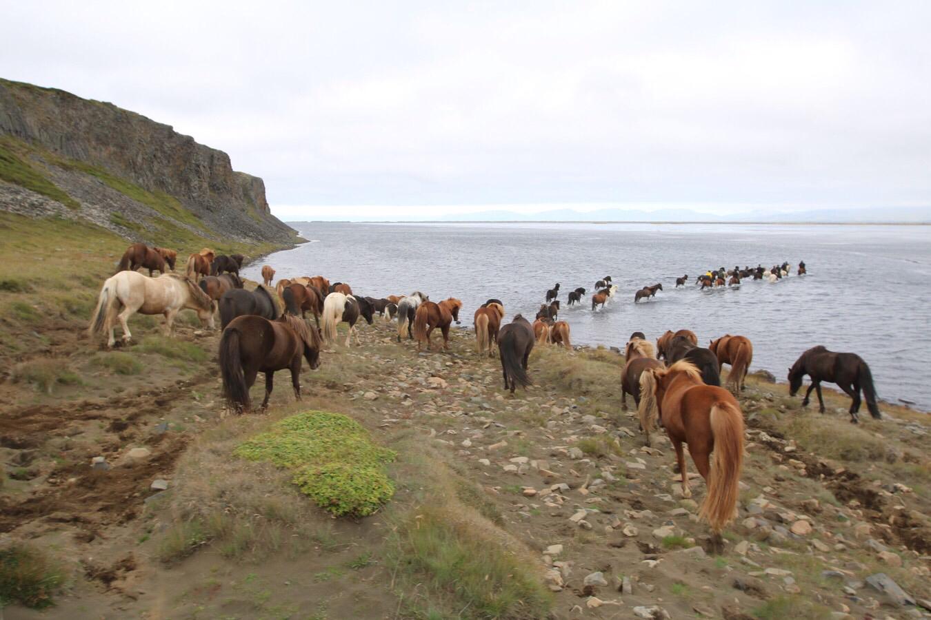 Fourth ridedag on Iceland
