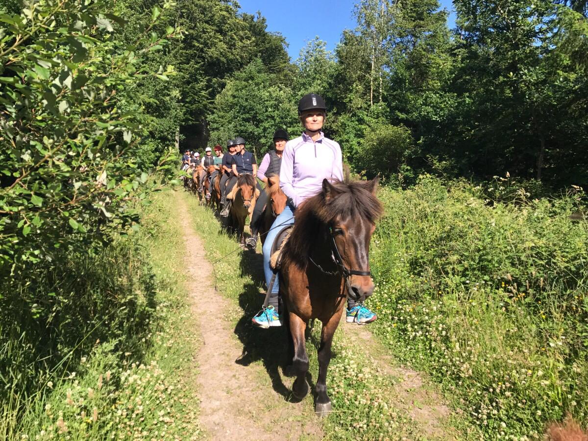 Tirsdagsholdet med Dorte og 12 heste
