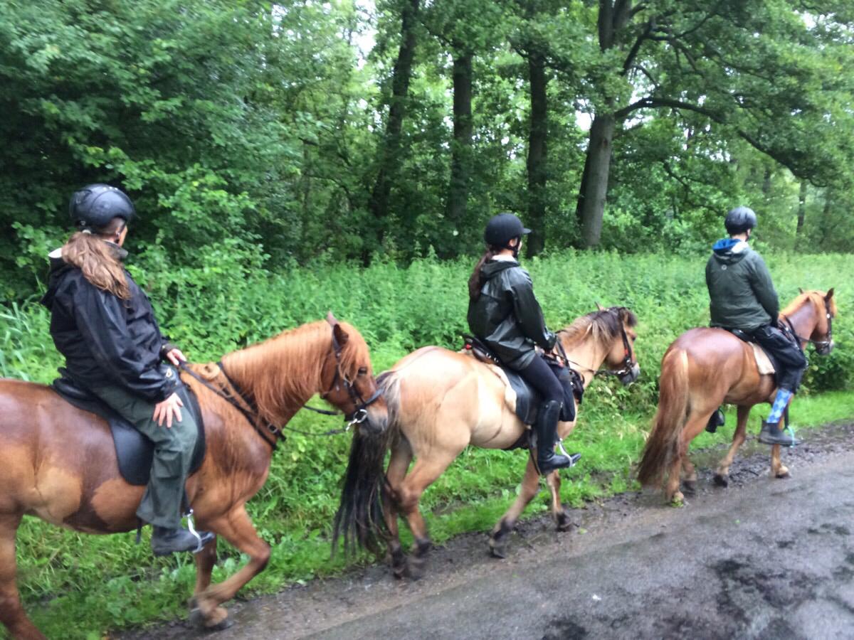 Islandskabsturen på ridelejren i uge 28
