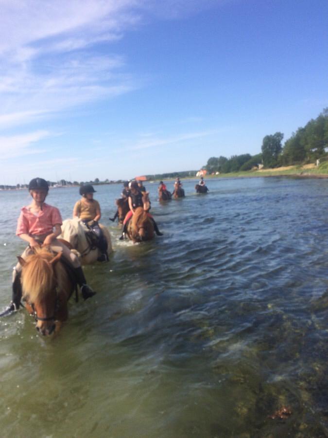 Strandturen på ridelejren i uge 29