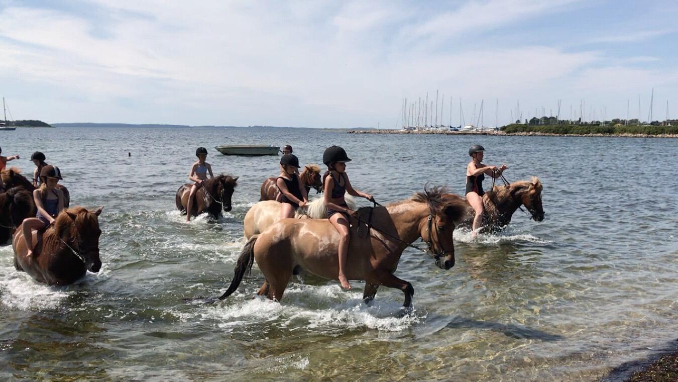Badetur med heste i uge 29