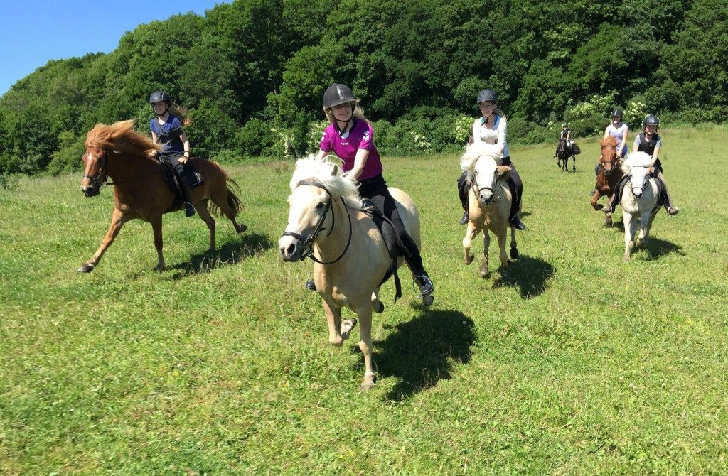 Gallop in the field during riding camp July 2015
