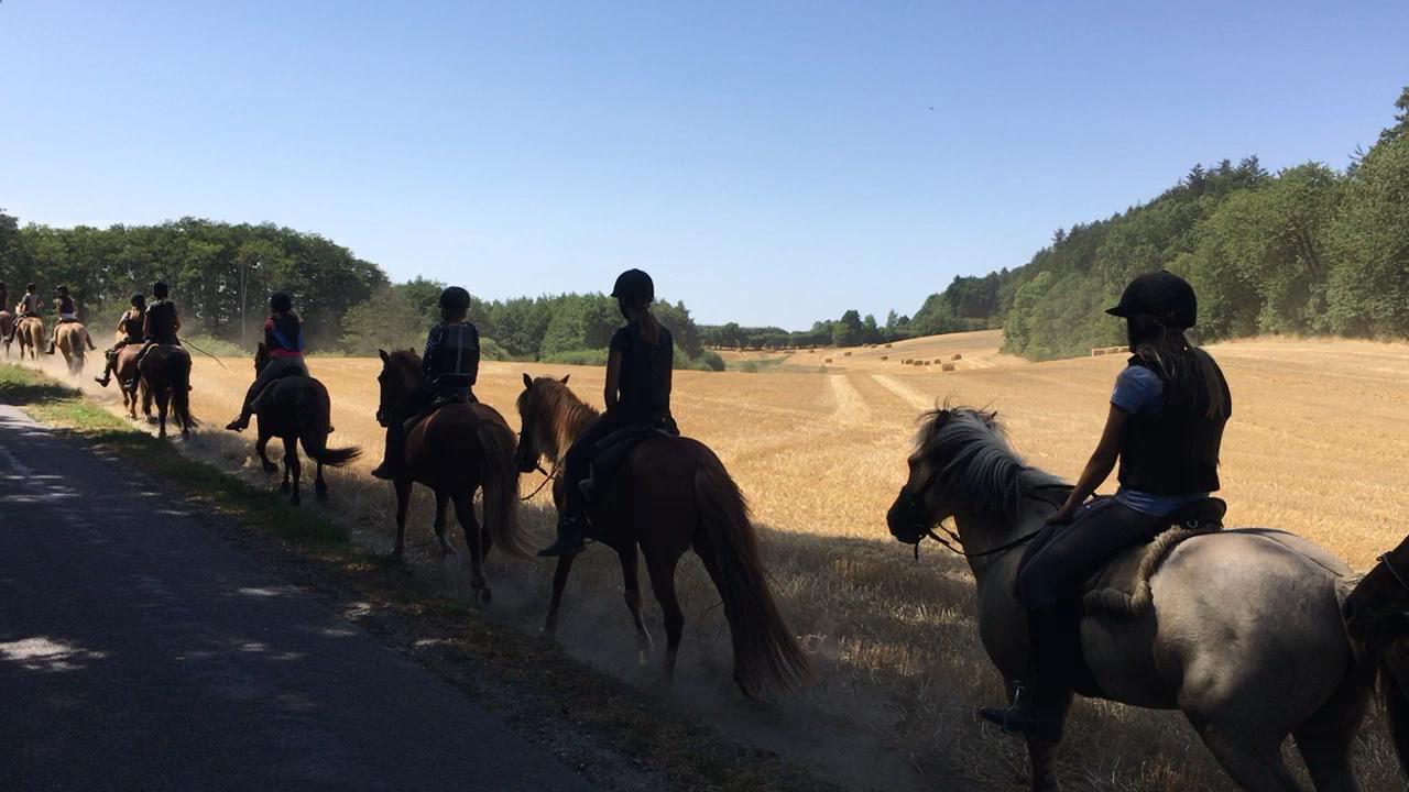På tur til komarkerne i Sollerupskoven