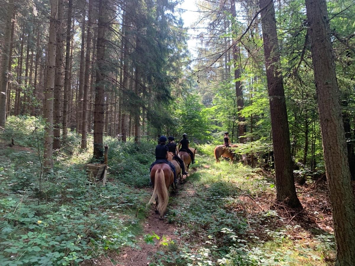 Islandskabsturen med ridelejr uge 28
