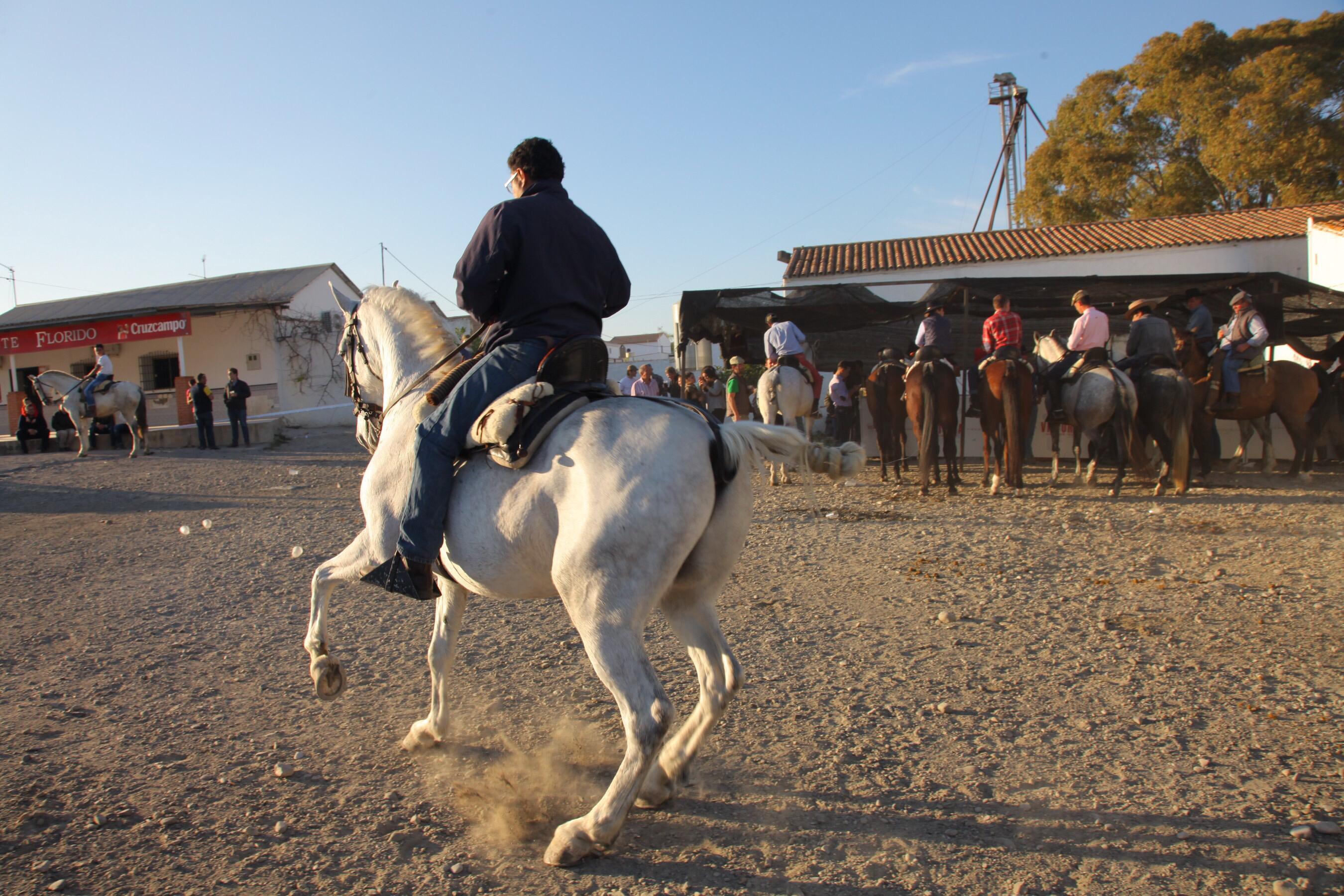 Til hesteshow i Zalea